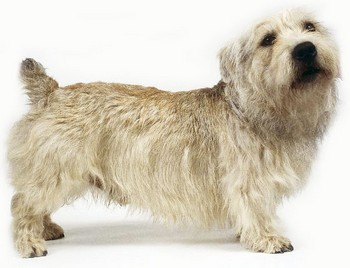 World's Rarest Dog Breed